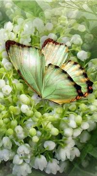 Аватар вконтакте Бабочка на ландышах
