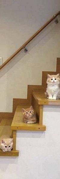 Аватар вконтакте Кошки сидят на ступеньках