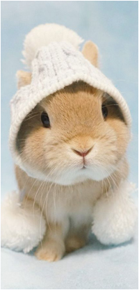 Аватар вконтакте Милый кролик в шапочке