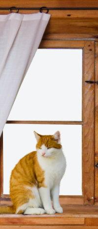 Аватар вконтакте Кошка сидит на подоконнике окна