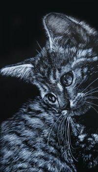 Аватар вконтакте Кошка, повернув голову, куда-то смотрит