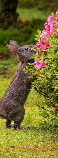 Аватар вконтакте Кролик у цветущего куста
