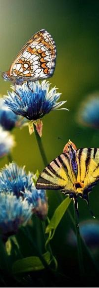 Аватар вконтакте Бабочка на голубых цветах