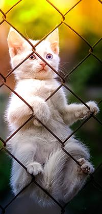Аватар вконтакте Белый котенок на сетчатом ограждении, фотограф Коротун Юрий