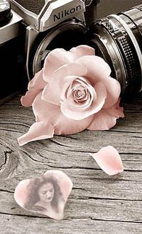 Аватар вконтакте Два фотоаппарата Nikon с розой и фото девушки на лепестке
