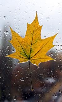 Аватар вконтакте Кленовый лист на мокром стекле