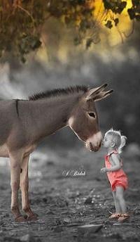 Аватар вконтакте Ребенок целует ослика