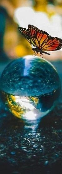 Аватар вконтакте Бабочка сидит на шаре