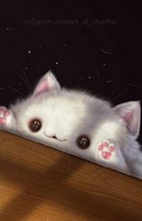 Аватар вконтакте Белый, выглядывающий из - под стола, котенок