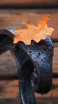 Аватар вконтакте Осенний дубовый листок лежит на мокром подлокотнике скамейки