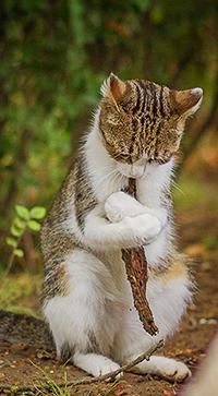Аватар вконтакте Кот, обнимающий веточку, фотограф Игорь Триер