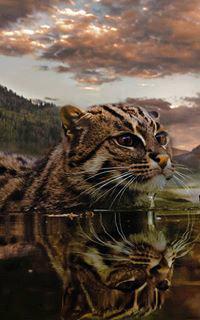 Аватар вконтакте Кошка в воде