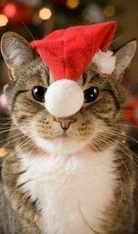 Аватар вконтакте Кошка в новогодней шапке