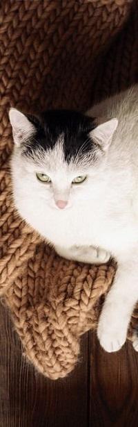99px.ru аватар Кошка лежит на вязанной вещи