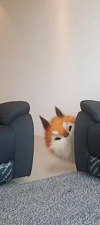 Аватар вконтакте Лисенок выглядывает из-за дивана
