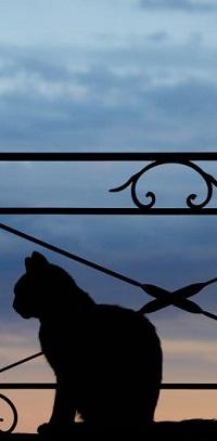 Аватар вконтакте Силуэт кота на фоне неба