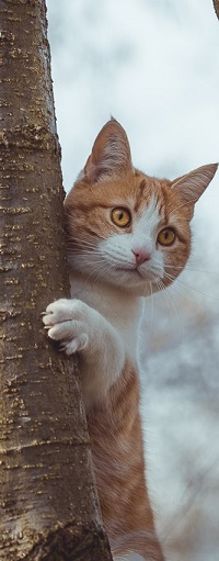 Аватар вконтакте Рыжий котик на дереве