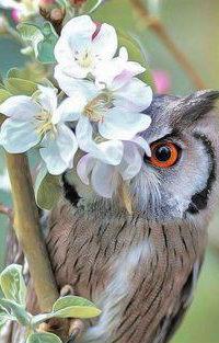 Аватар вконтакте Cова на цветущей весенней ветке