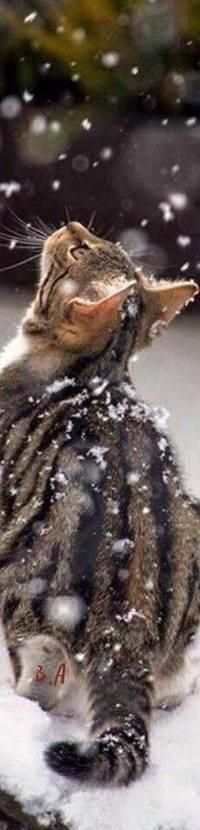 Аватар вконтакте Кошка под падающим снегом