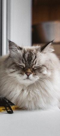 99px.ru аватар Пушистая кошка дремлет на окне