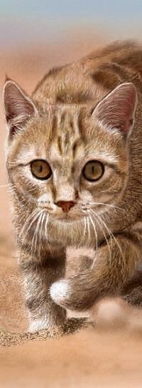 Аватар вконтакте Крадущаяся рыжая кошка