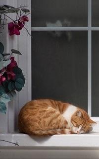 Аватар вконтакте Рыжий кот лежит на подоконнике окна