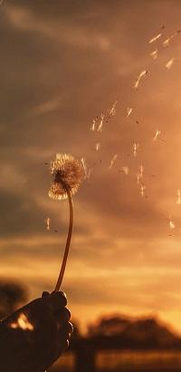 Аватар вконтакте Одуванчик в руке с разлетающимися пушинками на фоне неба