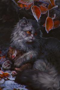 Аватар вконтакте Yellowfang / Щербатая из романа Коты-Воители / Cats-Warriors согревает котенка