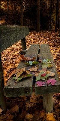 Аватар вконтакте Деревянная скамейка с листьями в осеннем парке
