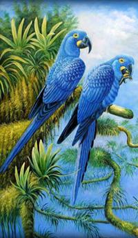 Аватар вконтакте Два голубых попугая сидят на ветке на фоне пальм