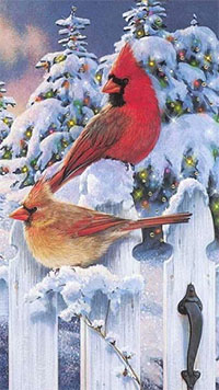 Аватар вконтакте Два клеста сидят на заборе на фоне новогодних елок в снегу