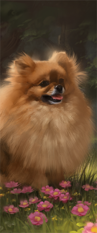 Аватар вконтакте Собака породы померанский шпиц, by LazyLapwing