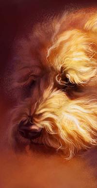 Аватар вконтакте Собака породы ирландский мягкошерстный пшеничный терьер, by Pixxus