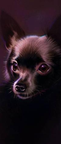 Аватар вконтакте Собака породы чихуахуа, by Pixxus