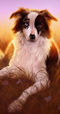 Аватар вконтакте Собака породы бордер-колли среди цветов, by Pixxus