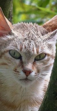 Аватар вконтакте Кошка у дерева
