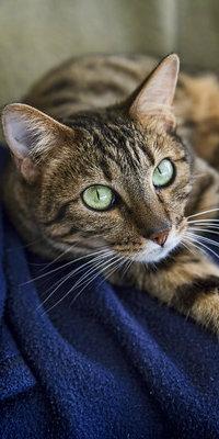 99px.ru аватар Кошка с зелеными глазами