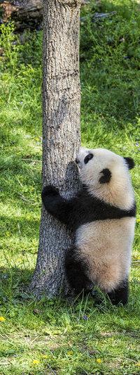 Аватар вконтакте Панда стоит у дерева