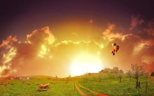 Обои Воздушные шары  над пасущимися на лугу коровами