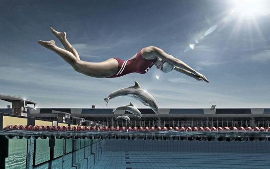 Обои Наперегонки с дельфинами