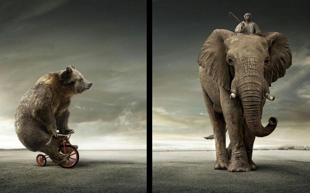 Обои для рабочего стола Цирк на свежем воздухе (мишка на трёхколёсном велосипеде, слон с наездником)