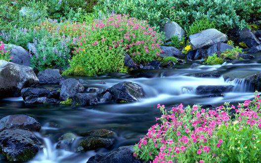 Обои Лесной ручеёк (красивый уголок природы)
