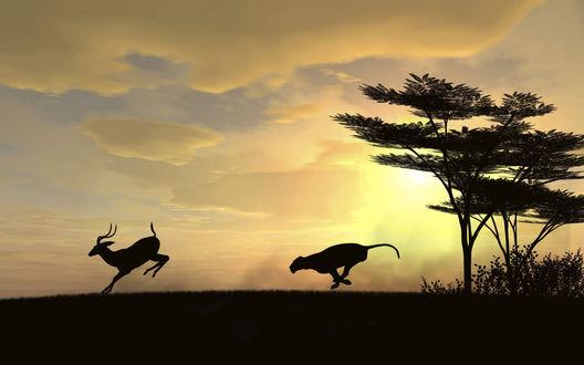Обои Гепард бежит за антилопой, жизнь саванны