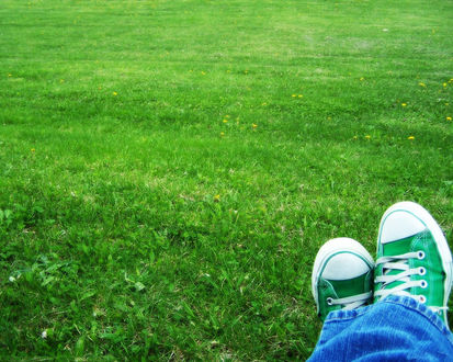 Обои Зеленые кеды на зеленой траве, полевые цветочки и молодая травка