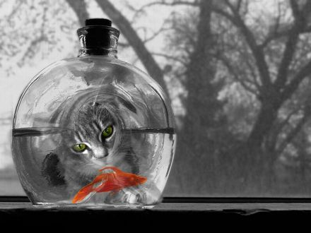 Обои В круглой бутылке плавает золотая рыбка, а серый кот внимательно за ней наблюдает через отверстие