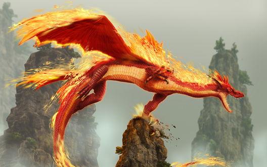 Обои Красный дракон
