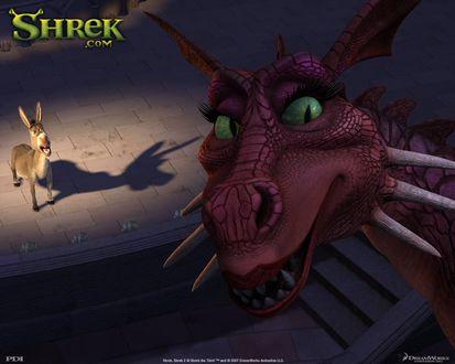 Обои Shrek, Шрек, Дракониха и Осел