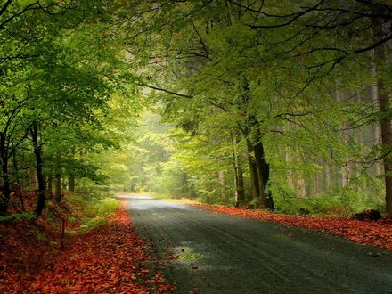 Обои Дорога проходящая через лес, осенью
