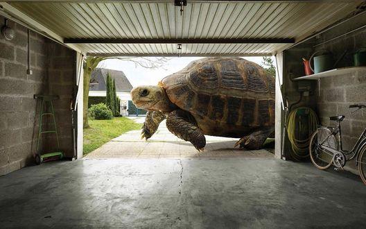 Обои Огромная черепаха проползает мимо ворот гаража