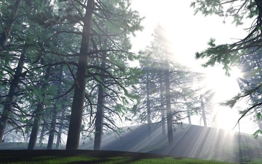 Обои Волшебный лес